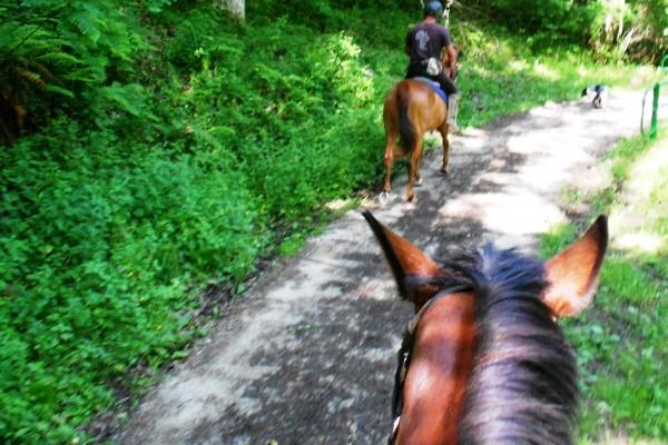 Horseback 6
