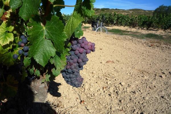 12 vineyards