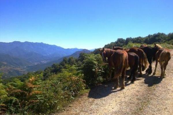 Horseback 3