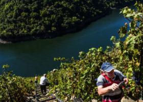 Galicia wine & walking tour